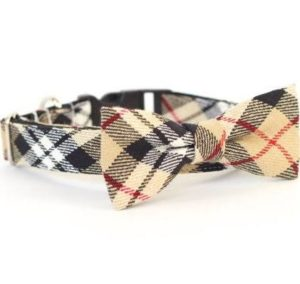 cute dog collars- hipster