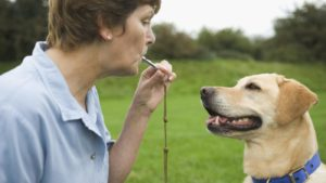 dog owner blowing whistle