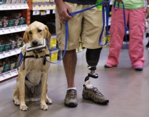 Brian Boone, 39, who lost his lower left leg while serving as a soldier in Afghanistan in 2011, holds the leash to Brindle, his two-year-old Labrador-golden retriever mix at Home Depot in Irving, Texas on Sept. 3, 2014. He was part of a group taking part in a field trip to learn how to work their dogs in public. Brindle holds a woman's wallet in his mouth until Brian takes it from him. The nine-day training session took place at Baylor Health Center at Irving- Coppell, in Irving, Texas. (David Woo/The Dallas Morning News/MCT)