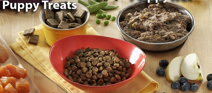 several bowls with wet and dry puppy food