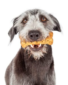 dog holding treat in his mouth