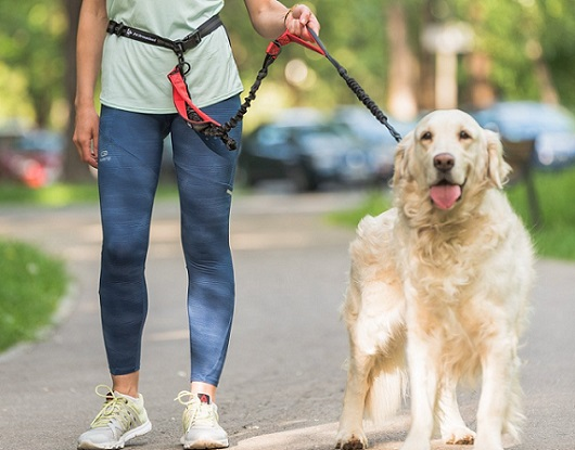 a woman with a dog on a PetDreamland Hands Free Dog Leash - Improved Walking Leash with 3 Bungee Cords & Padded Handles