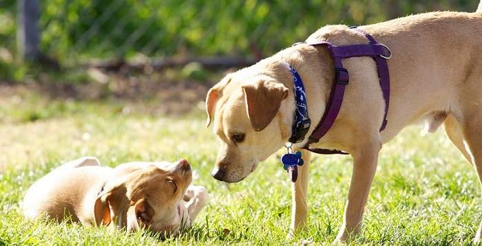 one larger dog looking at a smaller dog outdoors