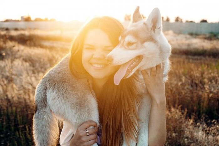 Young caucasian female playing with her siberian husky puppy in the field during the sunset. Happy smiling girl having fun with puppy outdoors in beautiful light — Stock Photo #81545482 Young caucasian female playing with her siberian husky puppy in the field during the sunset. Happy smiling girl having fun with puppy outdoors in beautiful light