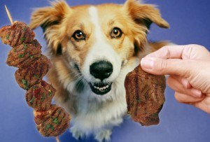 happy dog looking at meat