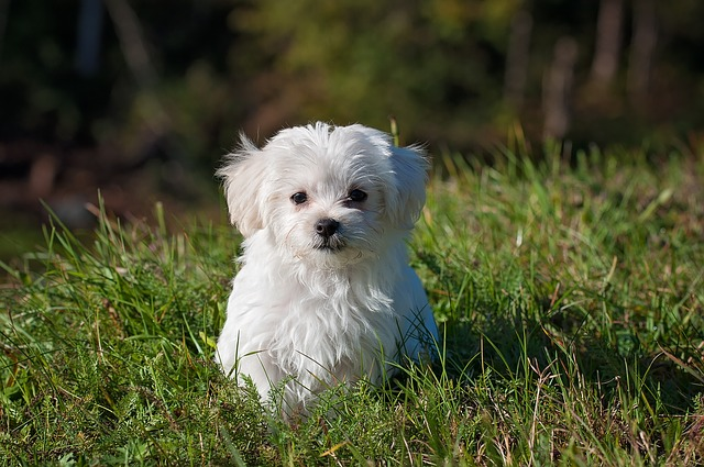 white puppy on green grass